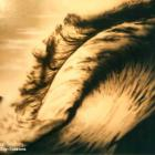 This wave was airbrushed in monotone by Absolute Sign Solutions Airbrushed wave in black and white Australia